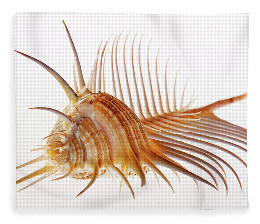 White Background Fleece Blanket featuring the photograph Venus Comb Murex Shell by Martin Harvey