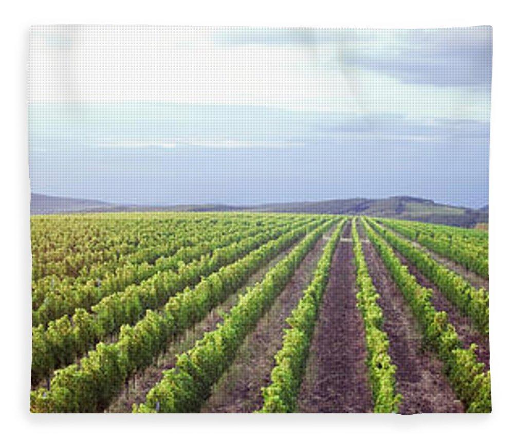 Scenics Fleece Blanket featuring the photograph Vineyard Panorama Sunrise by Malhrovitz