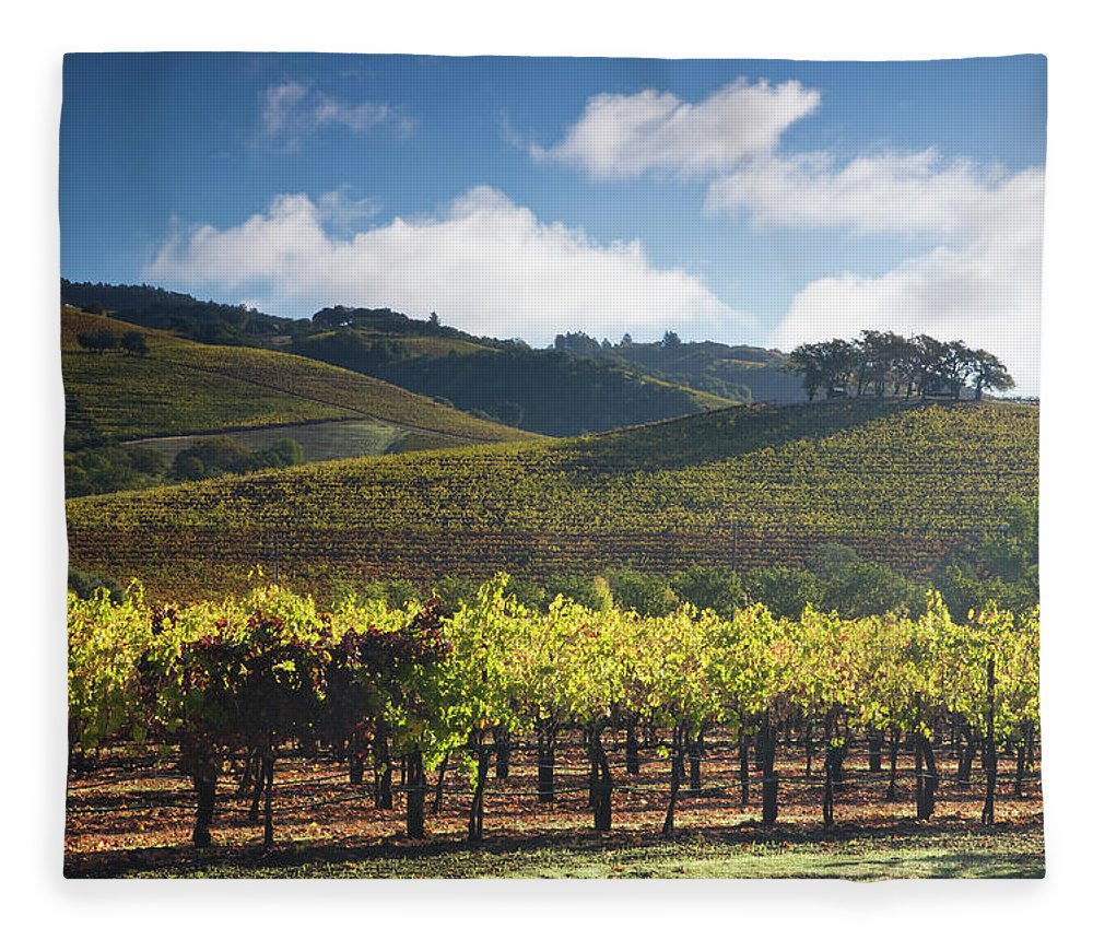 Sonoma County Fleece Blanket featuring the photograph Vineyards Autumn Time In Sonoma Valley by Darrell Gulin