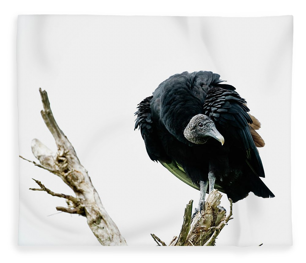 Animal Themes Fleece Blanket featuring the photograph Vulture Perched On Tree by Roine Magnusson