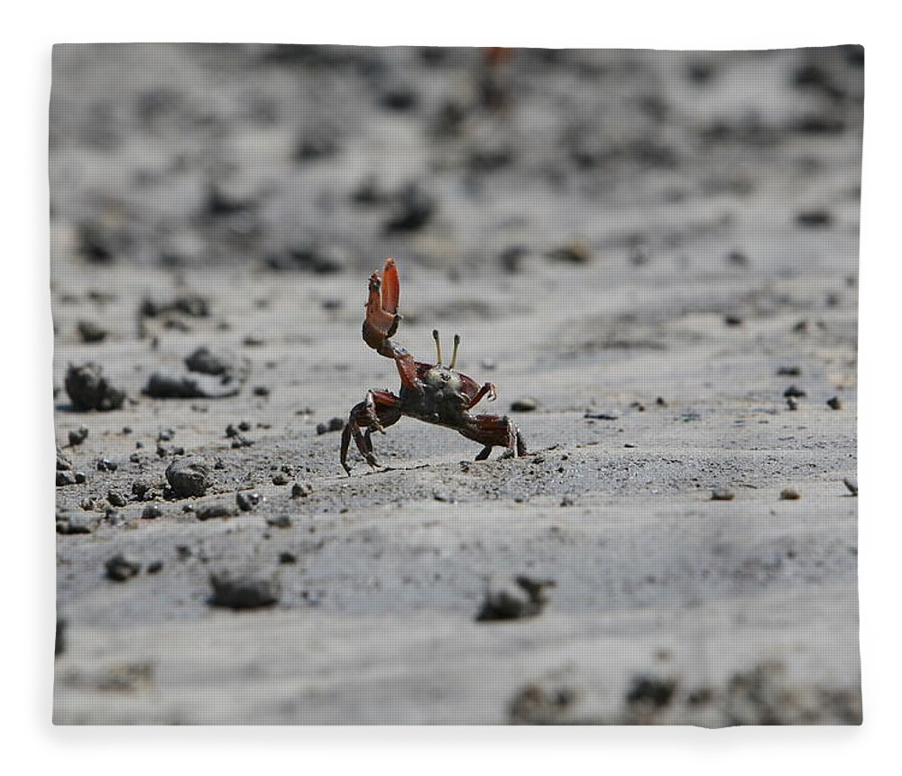 Waving Fleece Blanket featuring the photograph Waving Crab Wants To Have Sex by Gergely Antal - Pgaalien@gmail.com