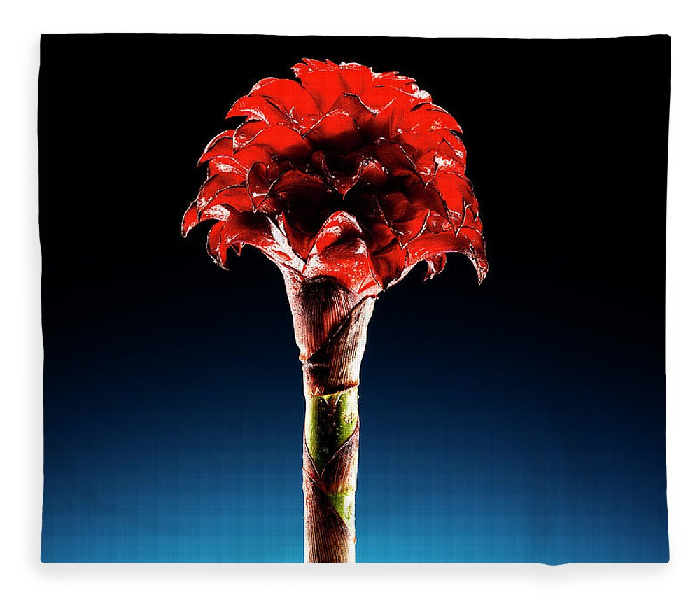 Single Object Fleece Blanket featuring the photograph Wax Ginger Flower by Chris Stein