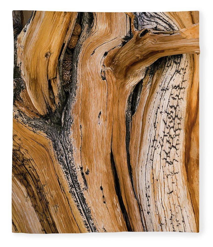 Weathered Fleece Blanket featuring the photograph Weathered Wood Of Ancient Bristlecone by Kevin Schafer