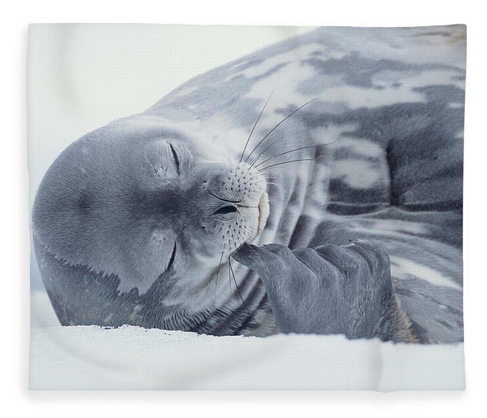 One Animal Fleece Blanket featuring the photograph Weddell Seal Leptonychotes Weddellii by Eastcott Momatiuk