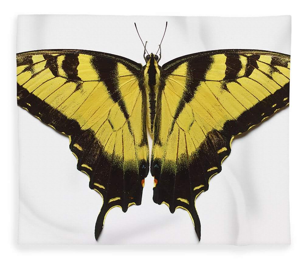 White Background Fleece Blanket featuring the photograph Western Tiger Swallowtail Butterfly by Don Farrall