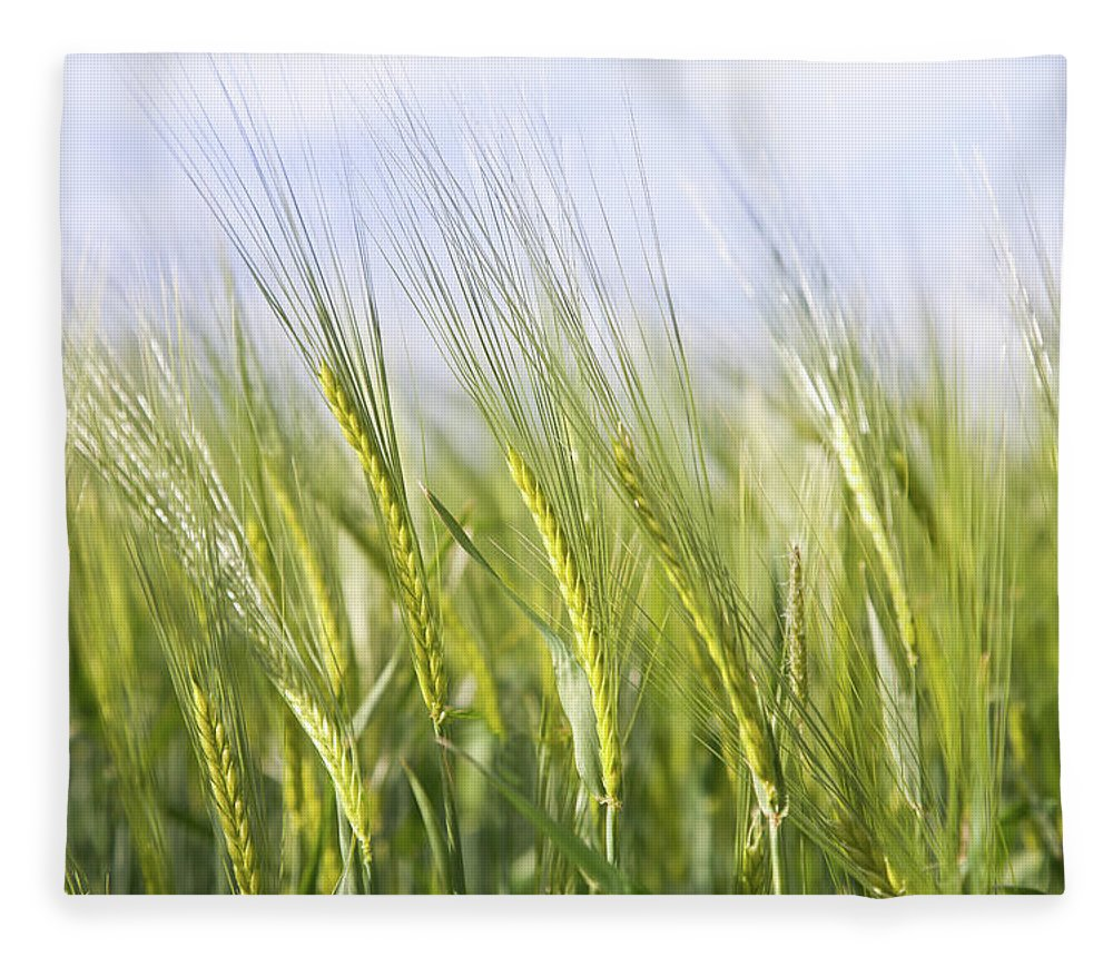 Scenics Fleece Blanket featuring the photograph Wheat Field by Peter Chadwick Lrps