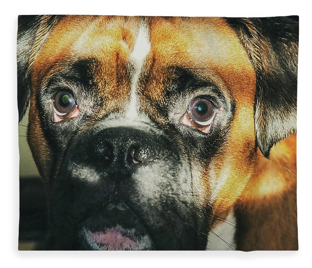 Dog Fleece Blanket featuring the photograph Where'd Everybody Go by CWinslow Shafer