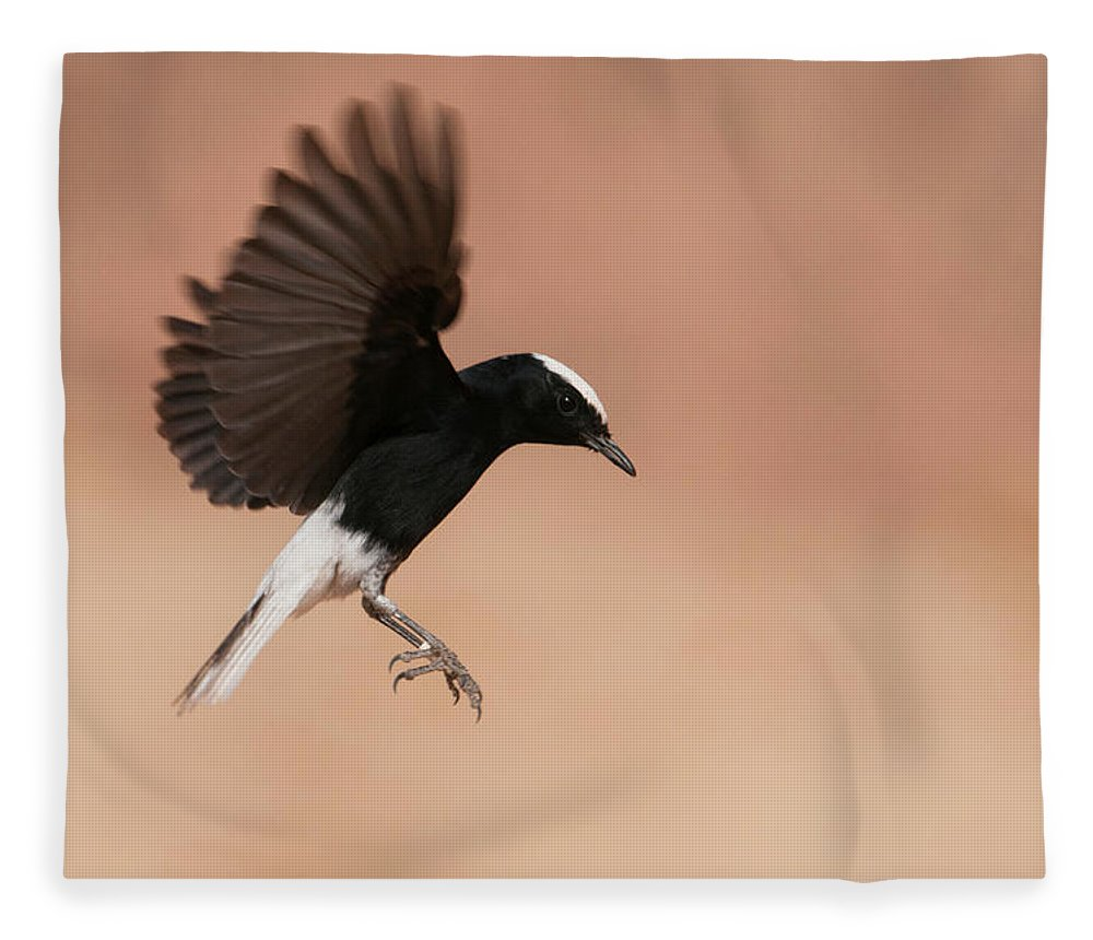 Eilat Fleece Blanket featuring the photograph White Crowned Wheatear by Dorit Bar-zakay