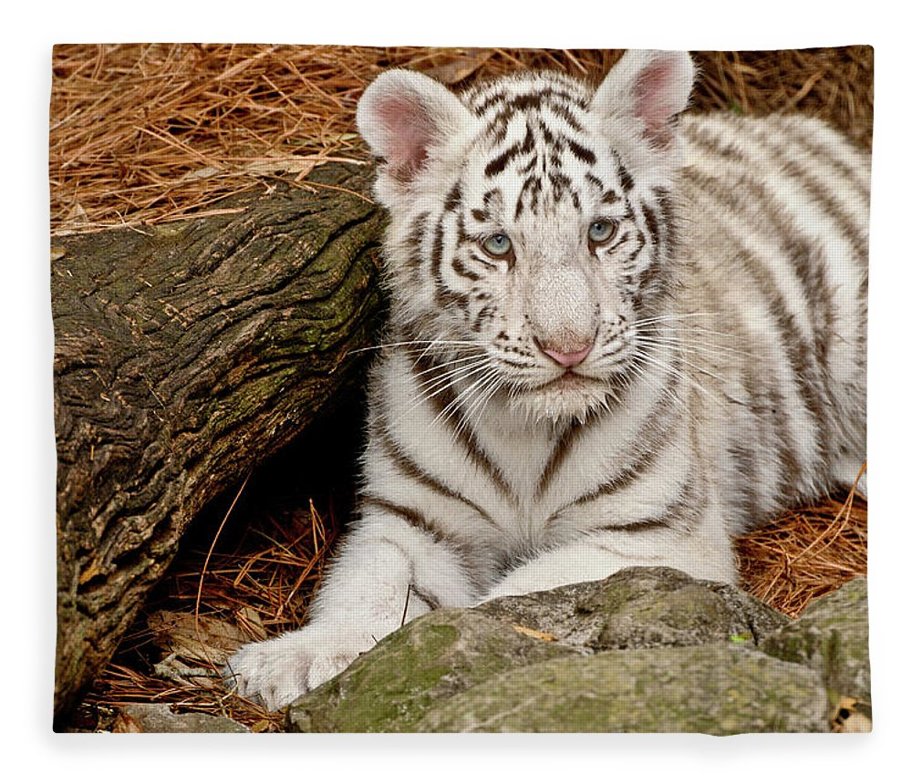 White Tiger Fleece Blanket featuring the photograph White Tiger Cub by Empphotography