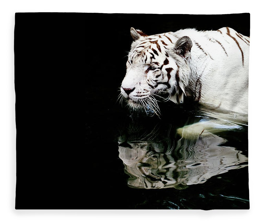 Three Quarter Length Fleece Blanket featuring the photograph White Tiger In Water by Carlina Teteris
