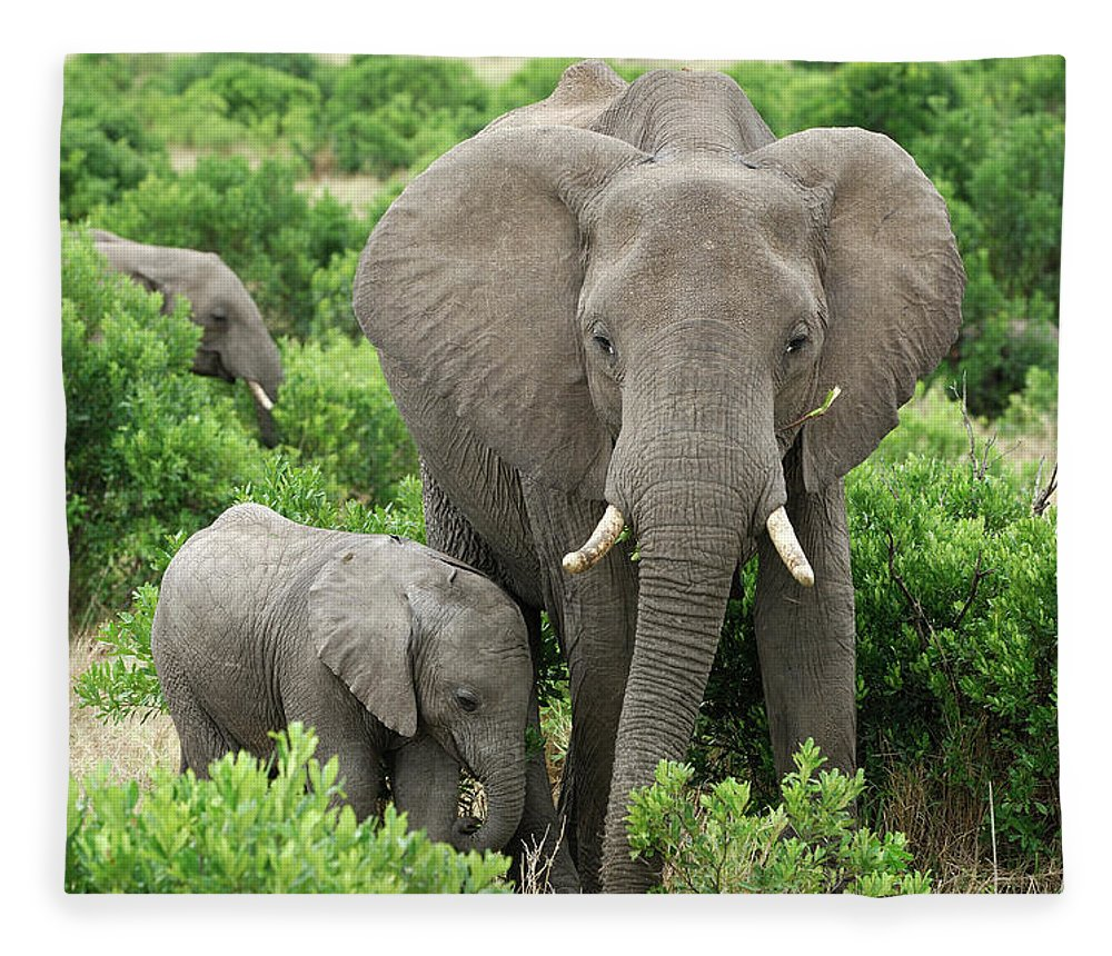 Wild African Elephant Mother And Baby Fleece Blanket For Sale By Gomezdavid