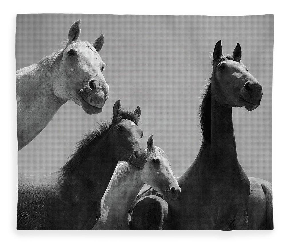 Horse Fleece Blanket featuring the photograph Wild Horses Portrait by Antonio Arcos Aka Fotonstudio Photography