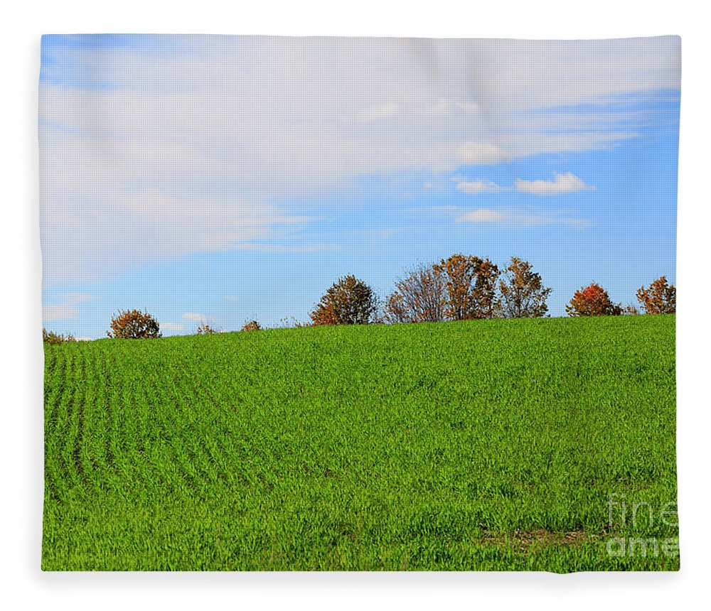Autumn Fleece Blanket featuring the photograph Winter Wheat In October In Southern Ontario by Louise Heusinkveld
