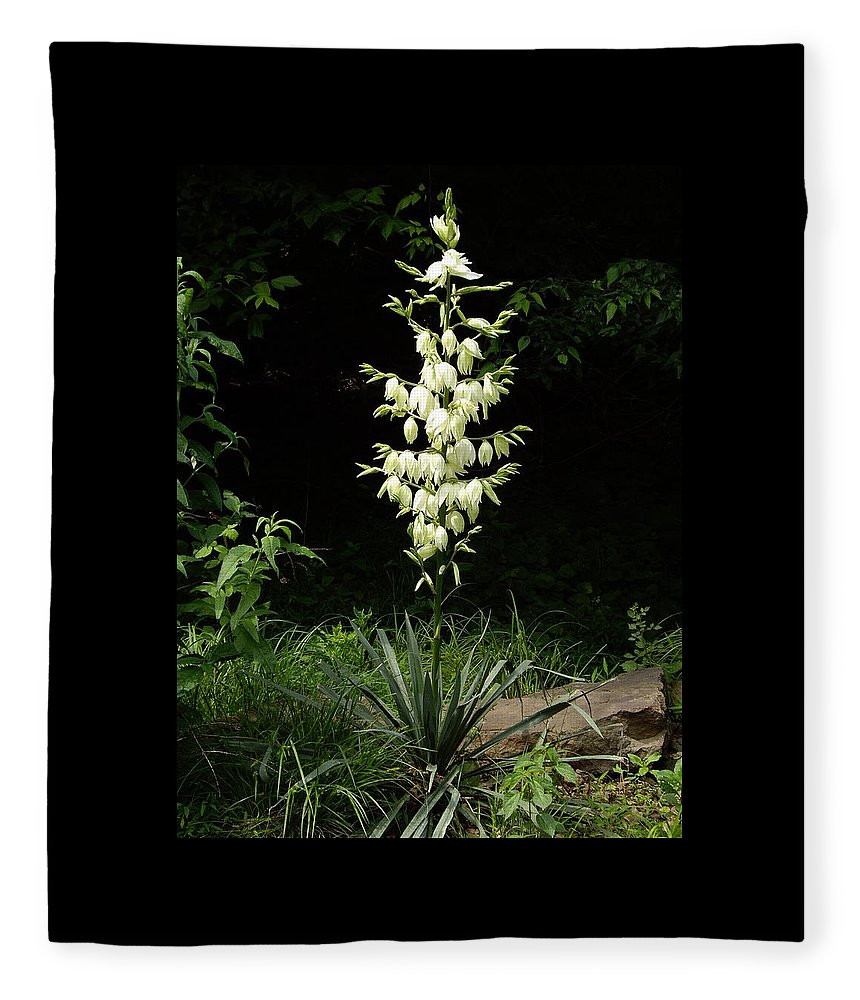Yucca Fleece Blanket featuring the photograph Yucca Blossoms by Nancy Ayanna Wyatt