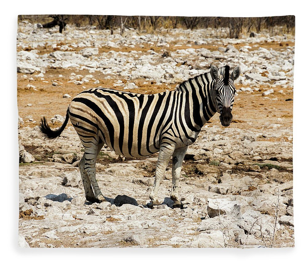 Animal Themes Fleece Blanket featuring the photograph Zebra And White Rocks by Taken By Chrbhm