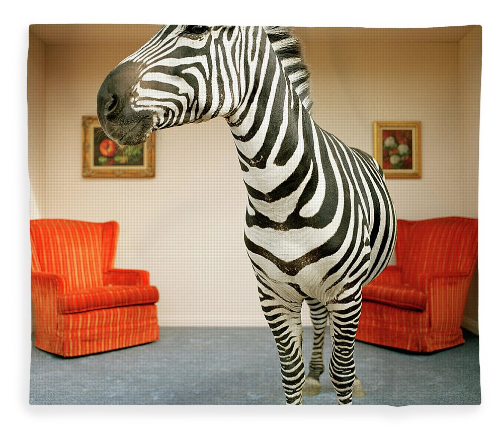 Out Of Context Fleece Blanket featuring the photograph Zebra In Living Room by Matthias Clamer