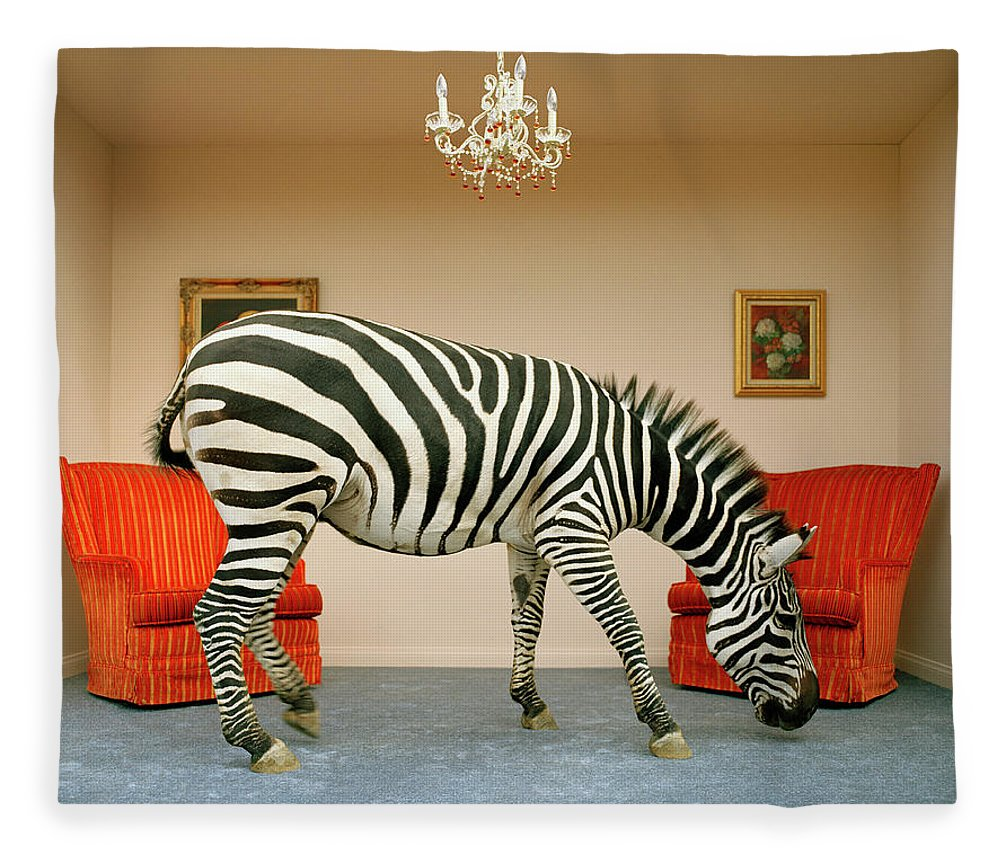 Out Of Context Fleece Blanket featuring the photograph Zebra In Living Room Smelling Rug, Side by Matthias Clamer