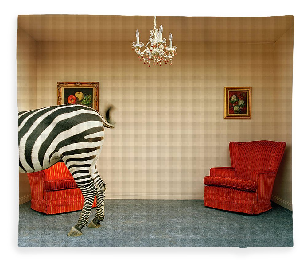 Out Of Context Fleece Blanket featuring the photograph Zebra In Living Room Swishing Tail by Matthias Clamer