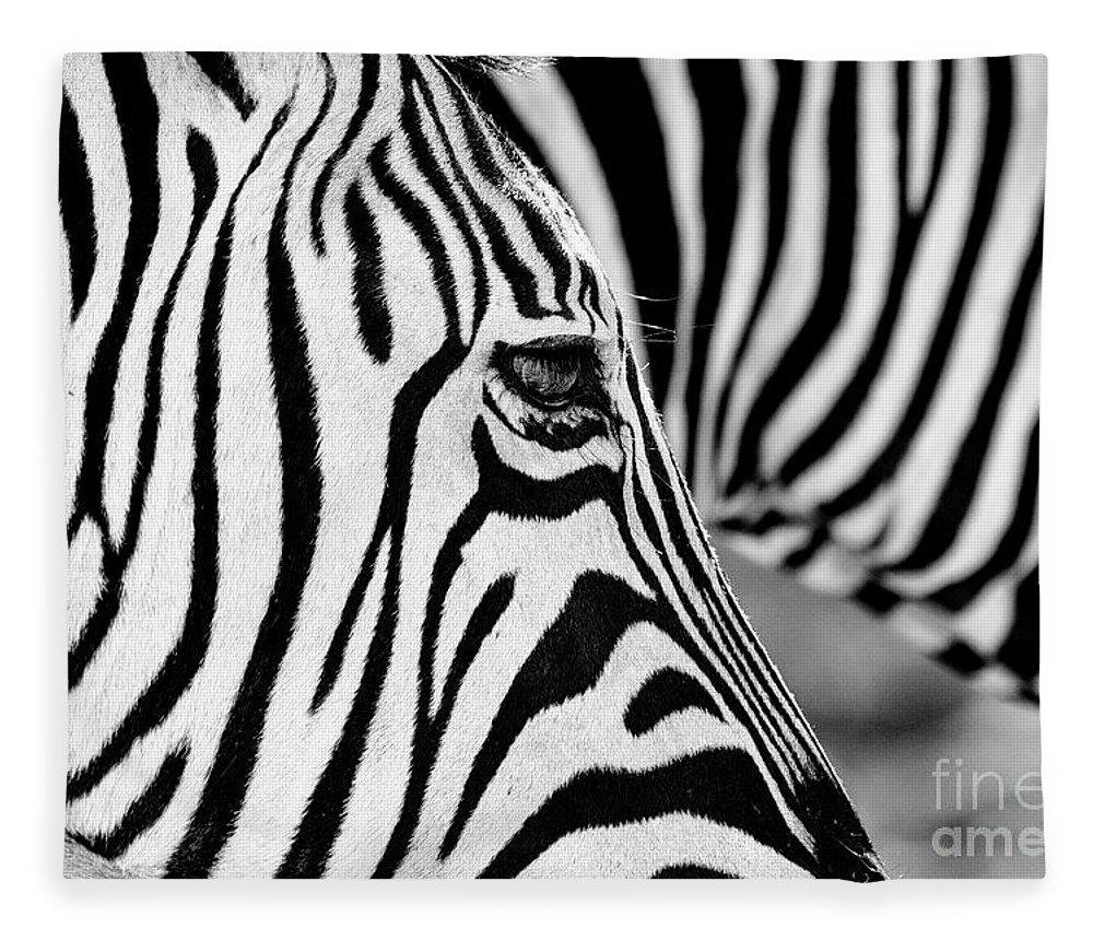 Animal Themes Fleece Blanket featuring the photograph Zebra Stripes by Chris Kolaczan