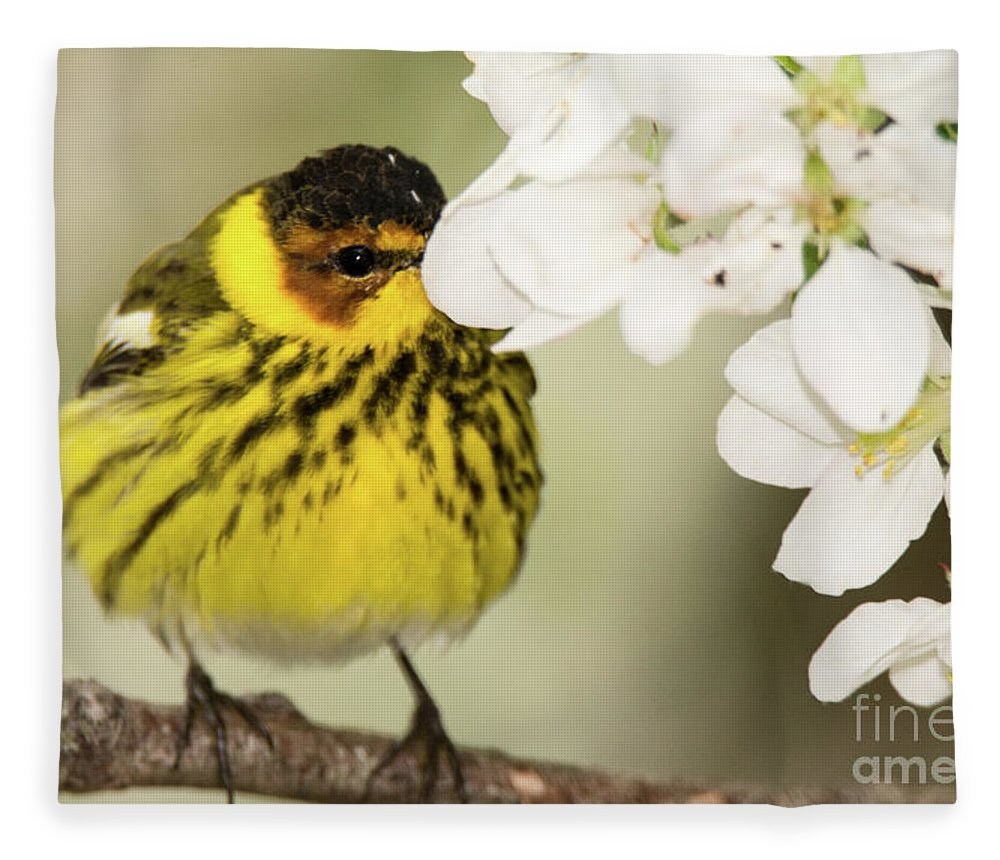 Warbler Fleece Blanket featuring the photograph I See You by Gaby Swanson