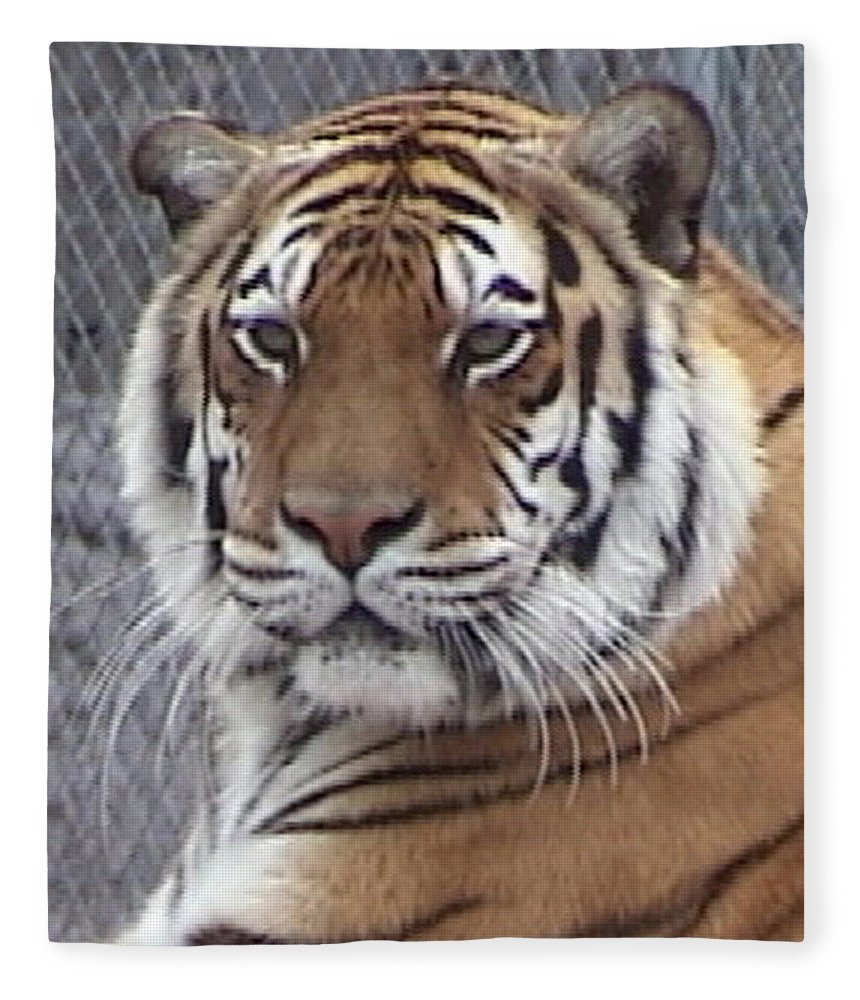 Panthera Fleece Blanket featuring the photograph Alexis by Barbara Keith