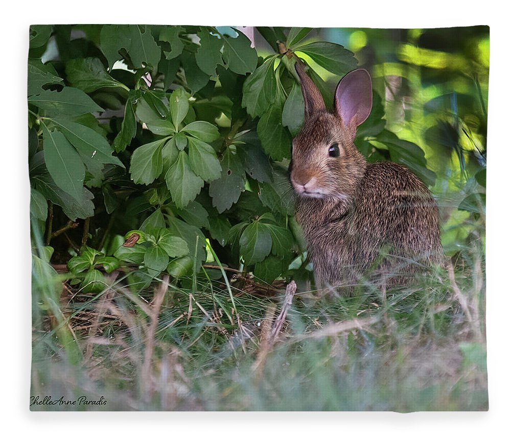 Fleece Blanket featuring the photograph Baby Bunny by ChelleAnne Paradis