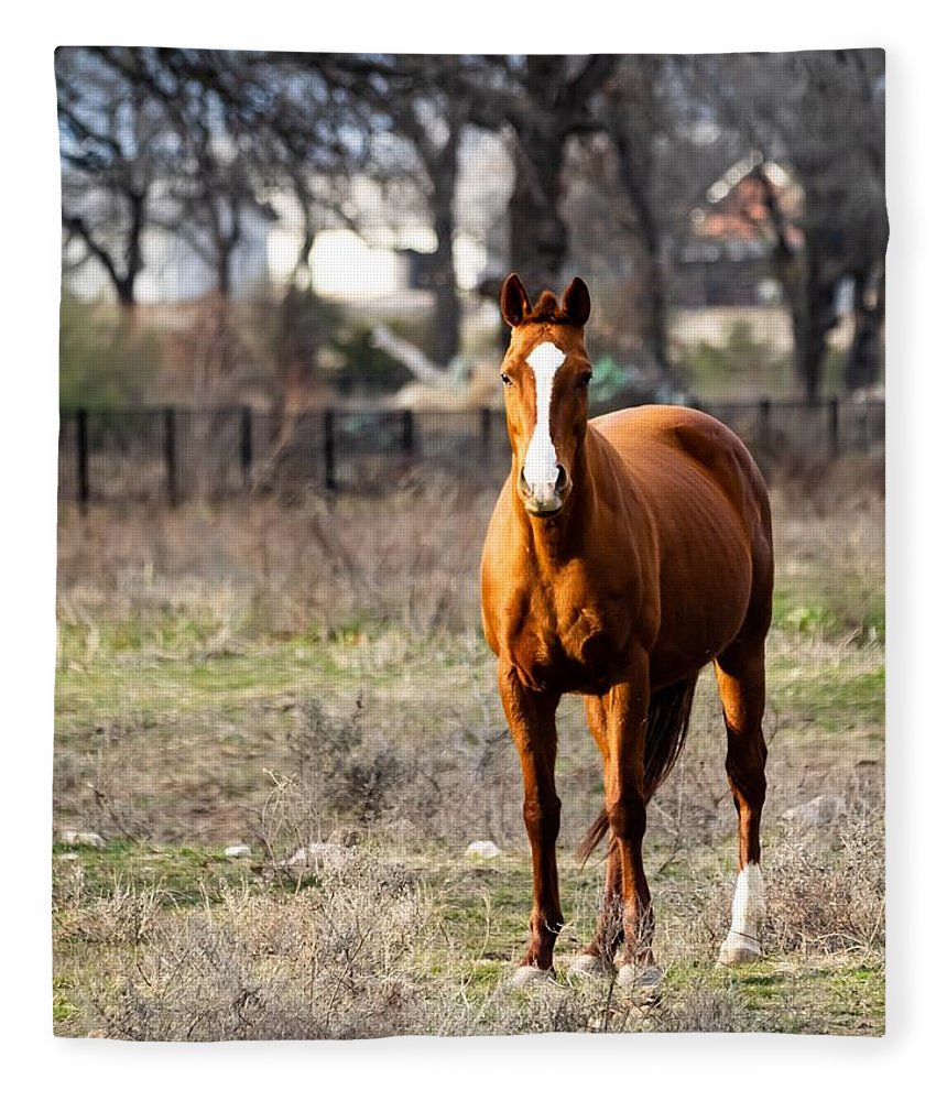 Horse Fleece Blanket featuring the photograph Bay Horse 3 by C Winslow Shafer