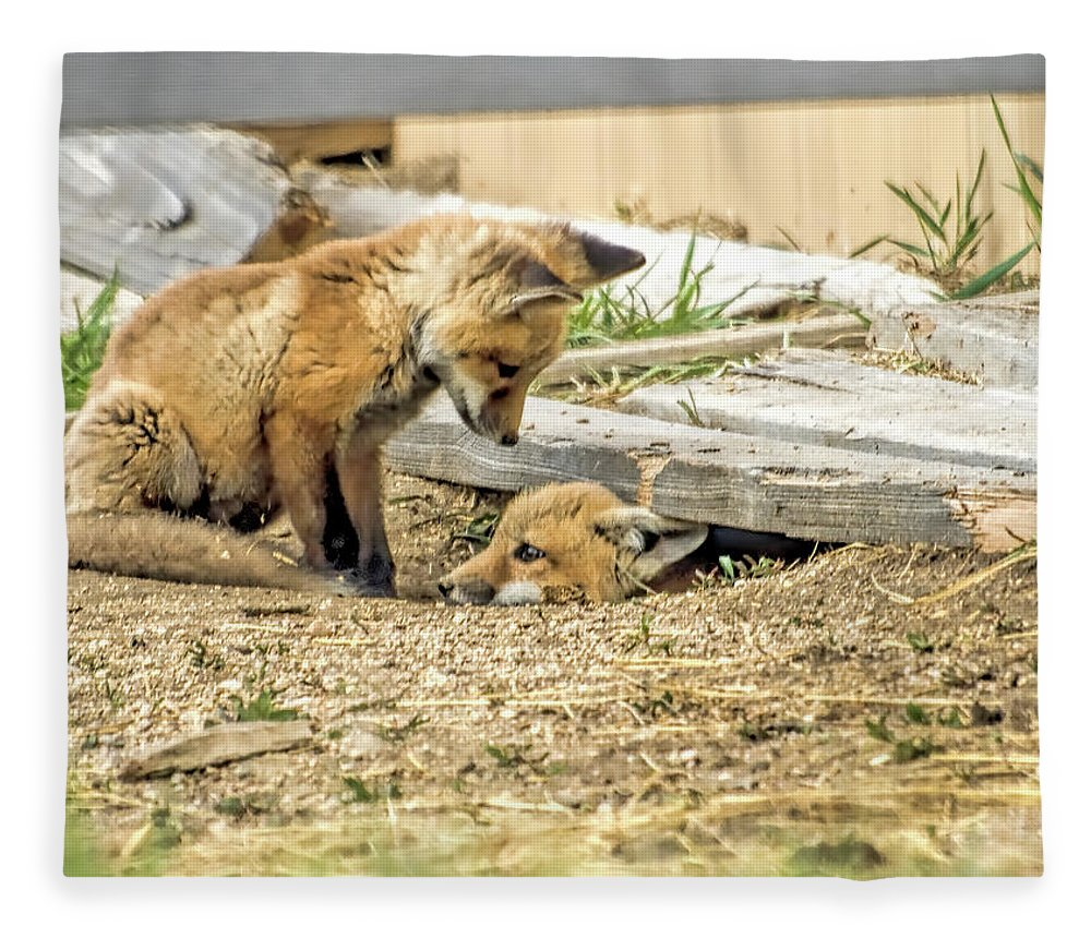 Fox Fleece Blanket featuring the photograph Come Out and Play by Alana Thrower