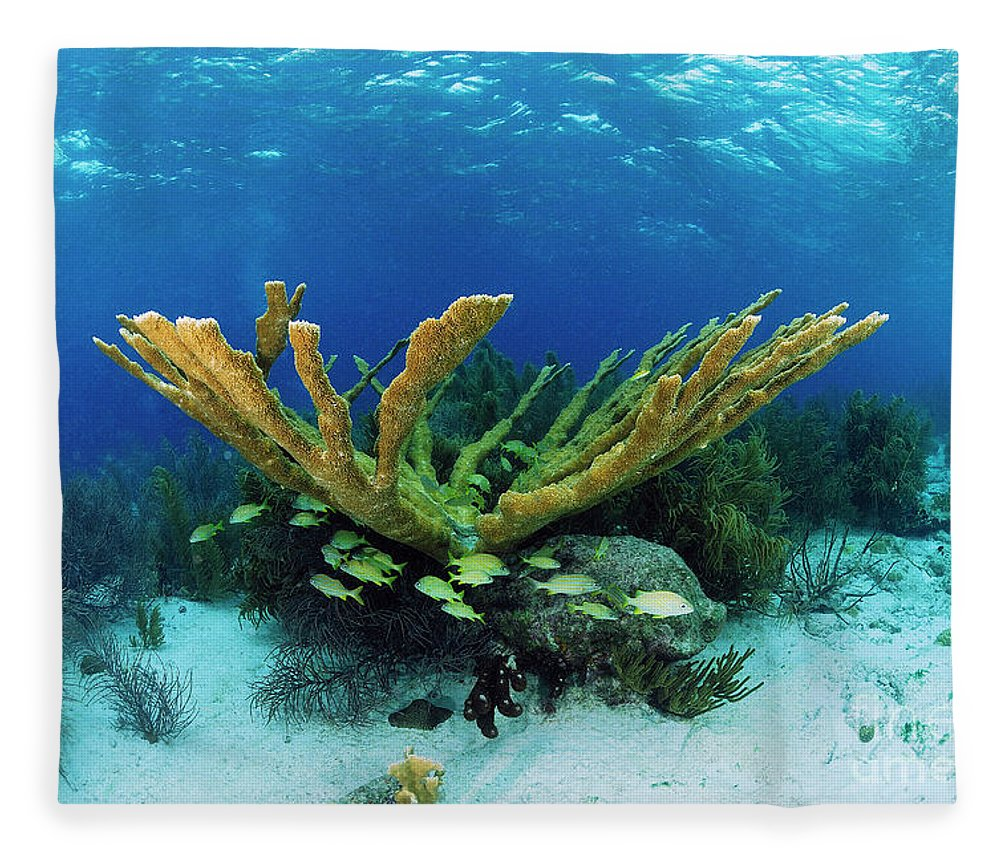 70007084 Fleece Blanket featuring the photograph Elkhorn Coral by Hans Leijnse