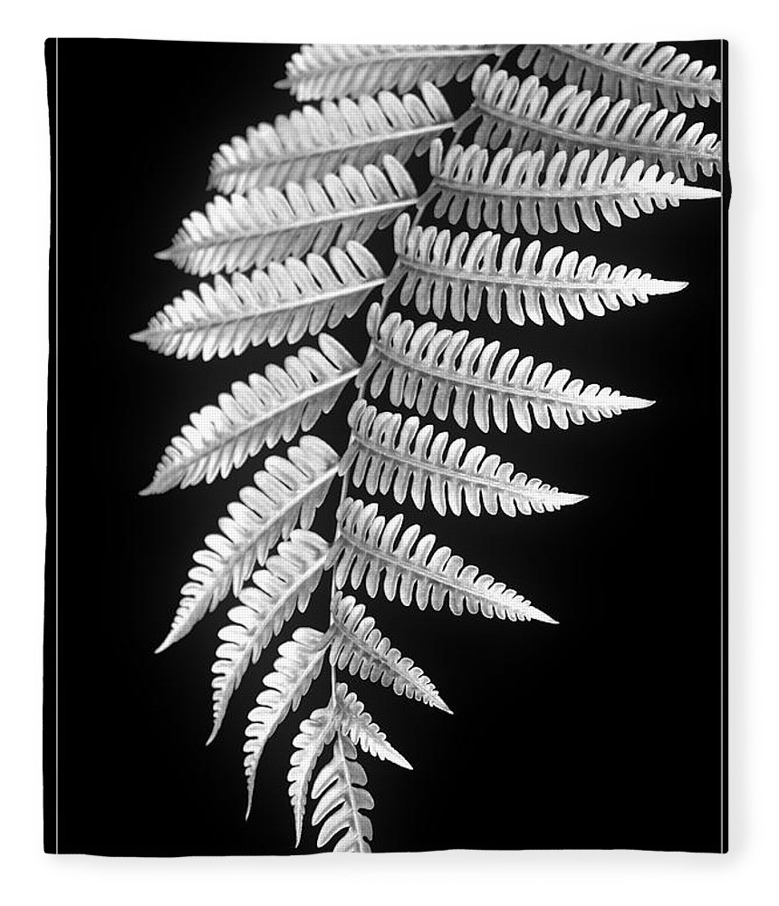 Australia; Floral Fleece Blanket featuring the photograph Fern Dance by Holly Kempe