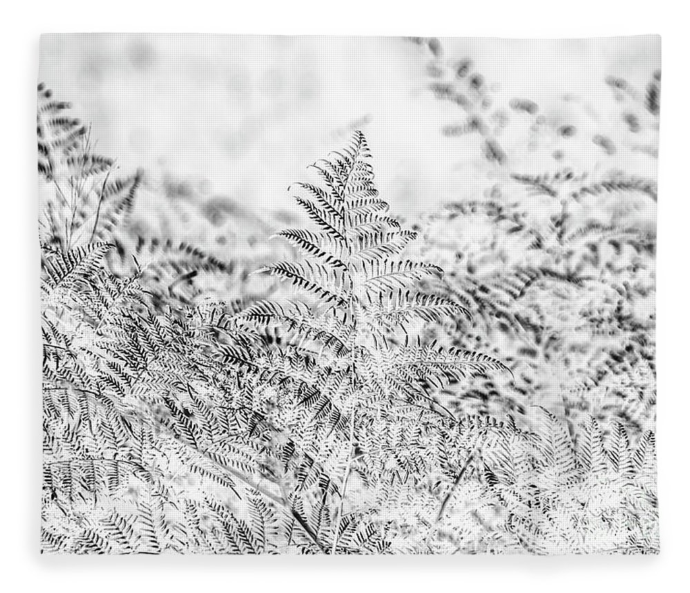 Forest Fleece Blanket featuring the photograph Ferny Grove by Jorgo Photography - Wall Art Gallery