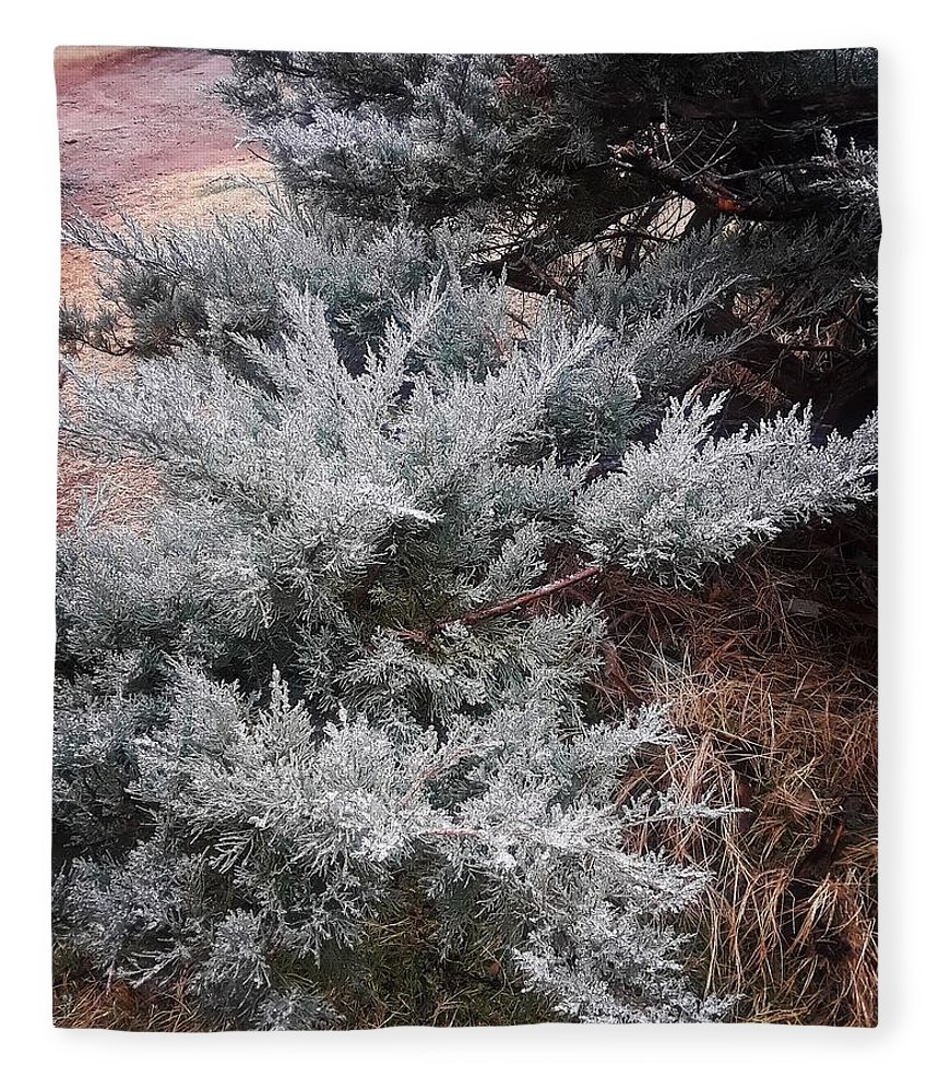 Scenery Fleece Blanket featuring the photograph First Frost by Ariana Torralba