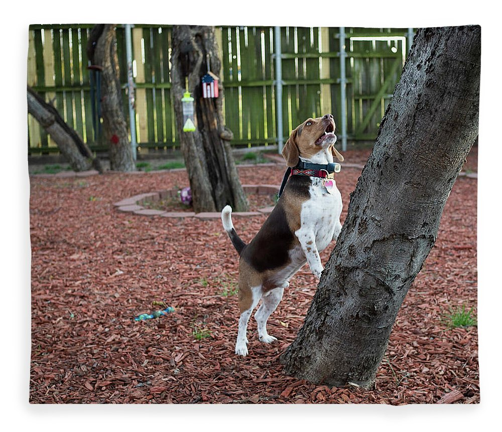 Dog Fleece Blanket featuring the photograph My Yard by C Winslow Shafer