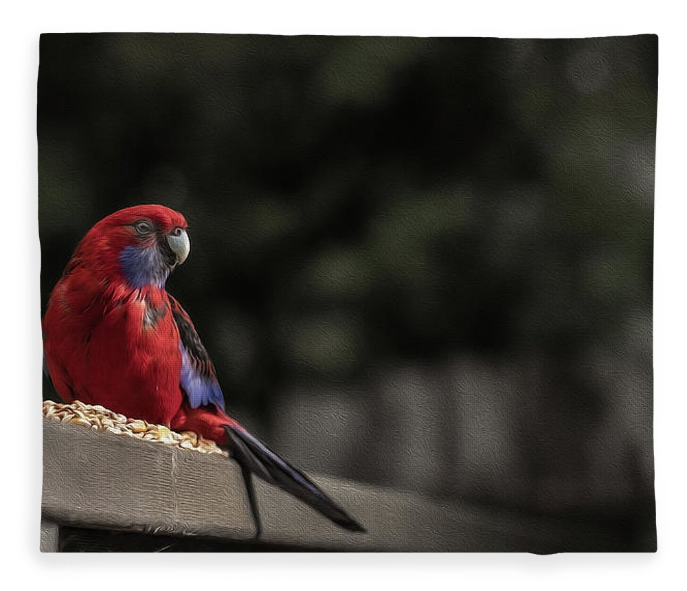 Rosella Fleece Blanket featuring the photograph Rosella 1 by Leigh Henningham