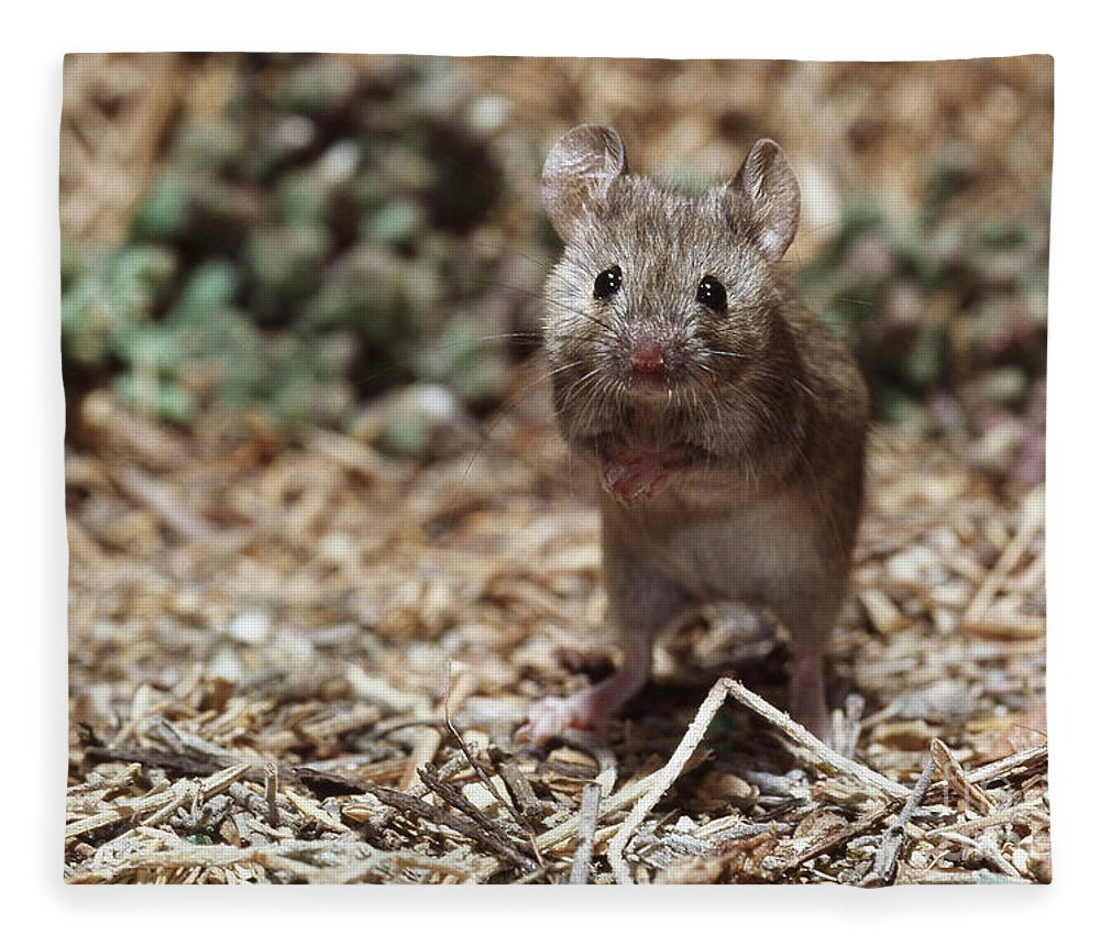 Animal Fleece Blanket featuring the photograph Salt Marsh Harvest Mouse by Tom McHugh