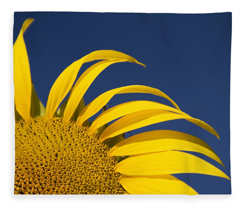 3scape Fleece Blanket featuring the photograph Sunflower by Adam Romanowicz