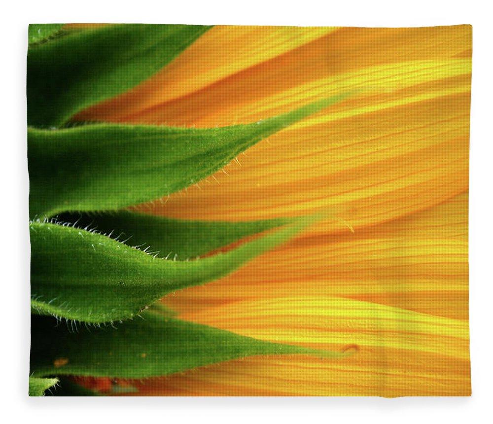Sunflower Fleece Blanket featuring the photograph Sunflower by Trevor Slauenwhite