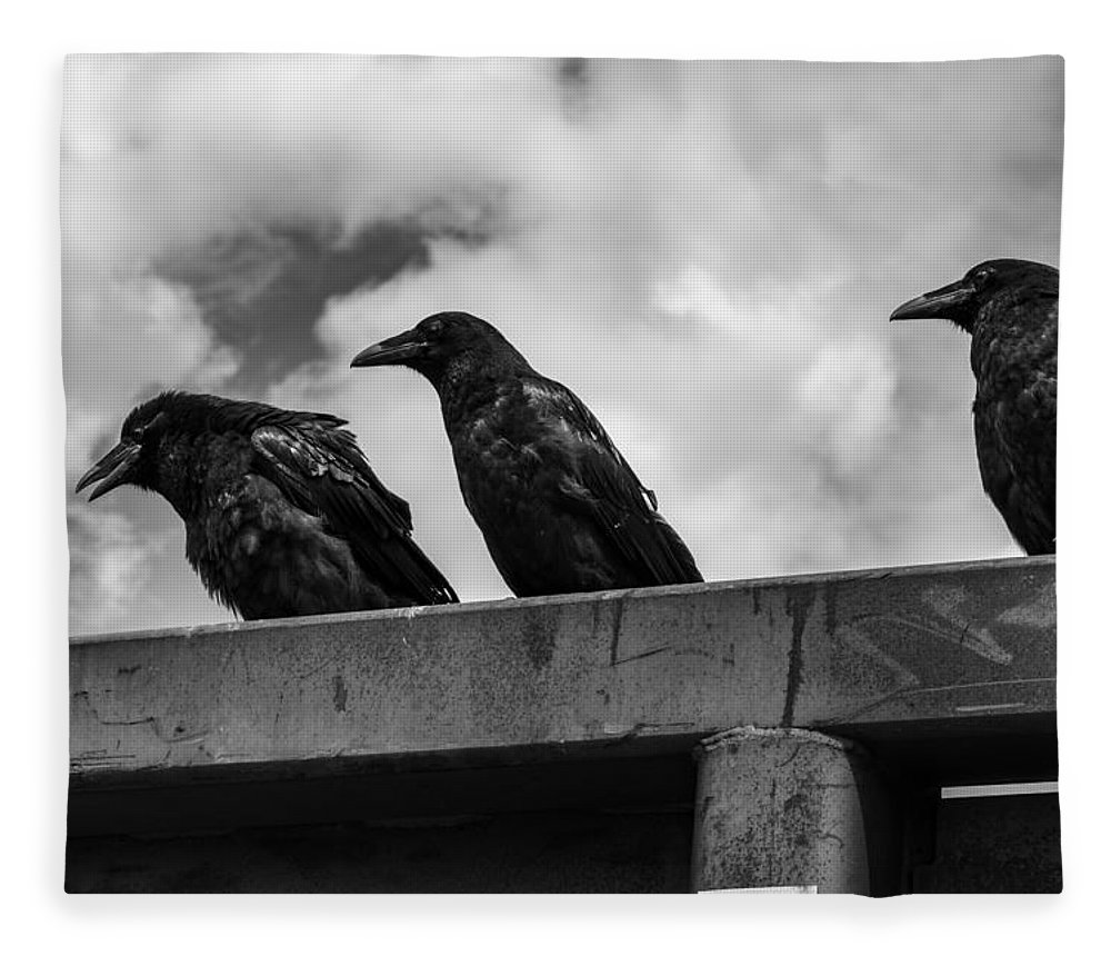 Three Fleece Blanket featuring the photograph Three Crows 2 by Damon Dulewich