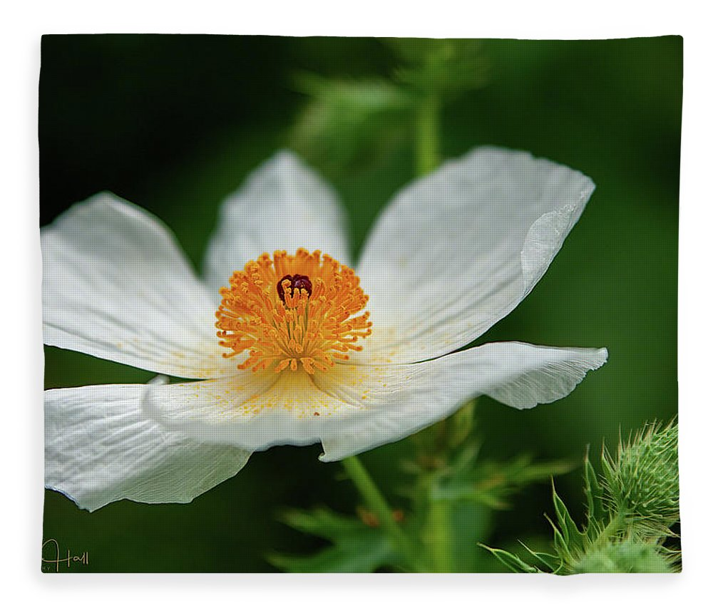 White Fleece Blanket featuring the photograph White Prickly Poppy by Linda Lee Hall