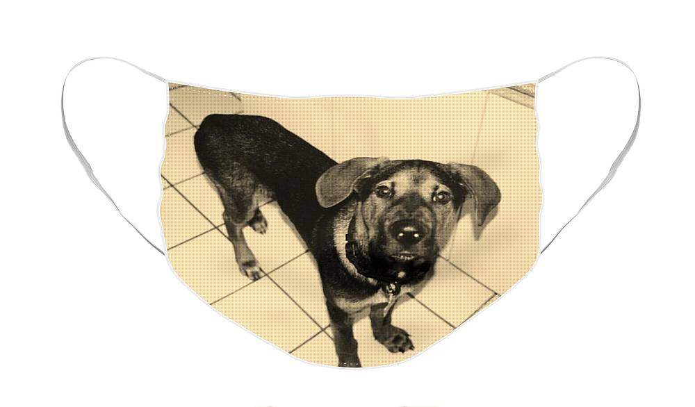 Dog Face Mask featuring the photograph Dukie by Rob Hans