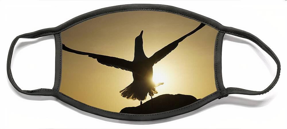 Feb0514 Face Mask featuring the photograph Western Gull At Sunset California by Hiroya Minakuchi