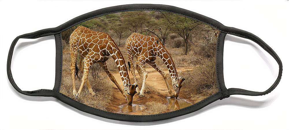 Africa Face Mask featuring the photograph Drinking in Tandem by Michele Burgess