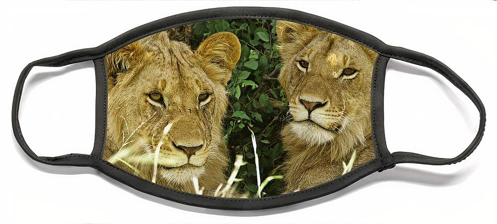 Lion Face Mask featuring the photograph Young Brothers by Michele Burgess