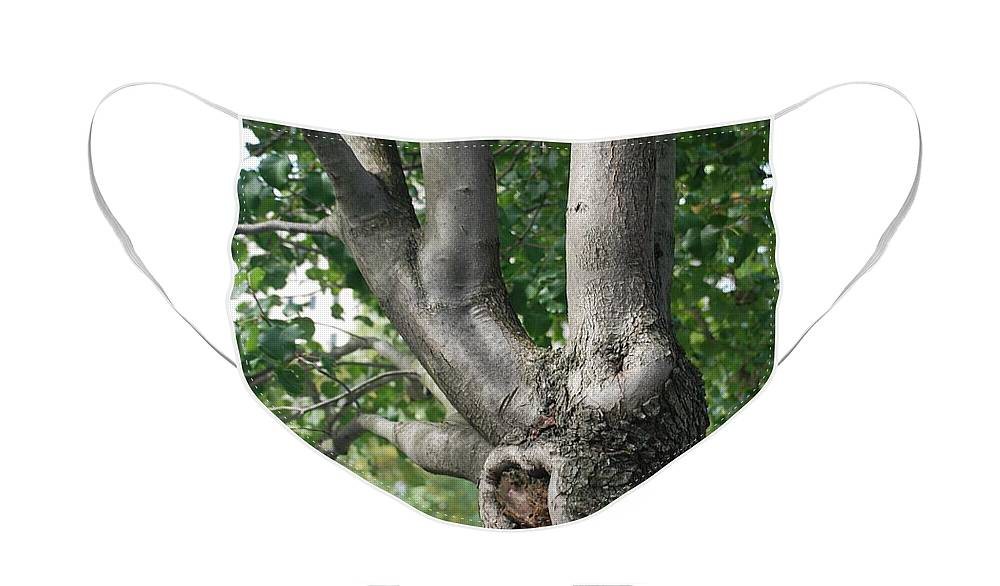 Wtc Face Mask featuring the photograph GROWTH on the SURVIVOR TREE by Rob Hans