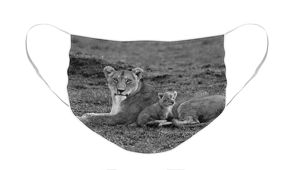 Lion Face Mask featuring the photograph Mama's Little Baby by Michele Burgess