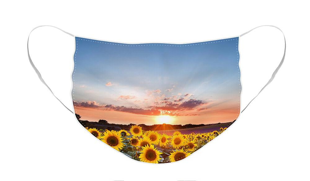 Sunflower Face Mask featuring the photograph Hope - Sunflower Summer Sunset landscape with blue skies by Matthew Gibson