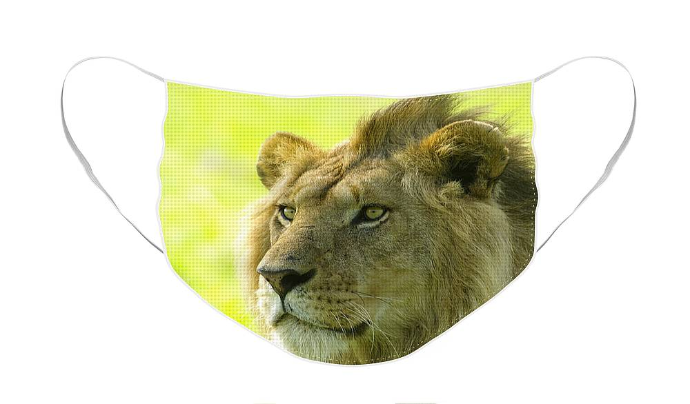 Lion Face Mask featuring the photograph Golden Boy by Michele Burgess