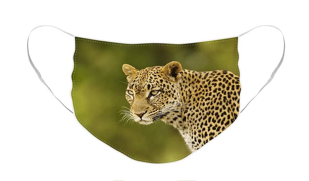 Africa Face Mask featuring the photograph Lovely Leopard by Michele Burgess