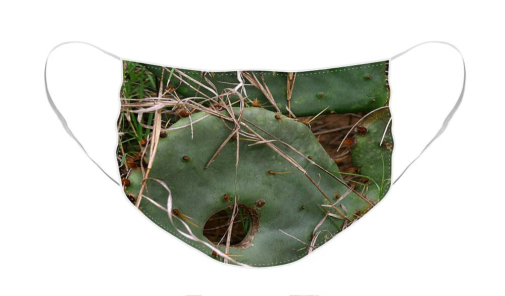 Cactus Face Mask featuring the photograph A Hole in One by Peter Piatt