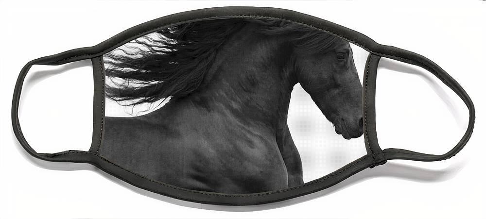 Horse Face Mask featuring the photograph Black Friesian Runs by Carol Walker